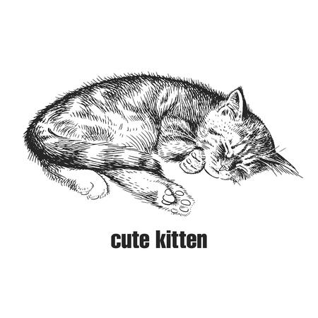 Lindo gatito está durmiendo. Mascota casera aislada sobre fondo blanco. Bosquejo. Arte de ilustración vectorial. Retrato realista de animal en estilo vintage grabado. Dibujo de gato a mano blanco y negro.