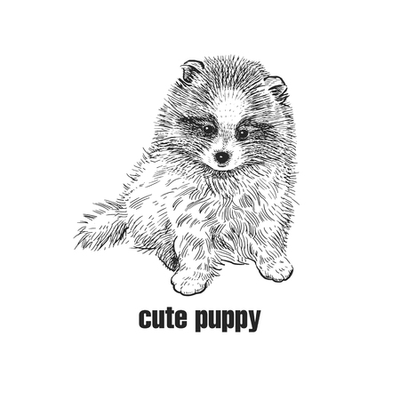 Cute puppy. Home pet isolated on white background. Sketch. Vector illustration art. Realistic portrait of animal in style vintage engraving. Black and white hand drawing of Pomeranian dog. 写真素材 - 108058844