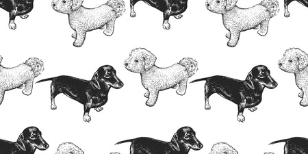 Bichon and Dachshund. Seamless pattern with cute puppies. Home pets isolated. Sketch. Vector illustration art. Realistic portraits of animal. Vintage. Black and white hand drawing of dogs.