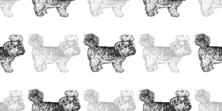 Yorkshire Terrier. Seamless pattern cute puppies. Home pets isolated on white background. Sketch. Vector illustration art. Realistic portraits of animal. Vintage. Black and white hand drawing of dogs. Illustration