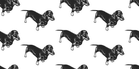 Dachshund. Seamless pattern with cute puppies. Home pets isolated on white background. Sketch. Vector illustration art. Realistic portraits of animal. Vintage. Black and white hand drawing of dogs. 일러스트