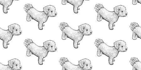 Bichon Frize. Seamless pattern with cute puppies. Home pets isolated on white background. Sketch. Vector illustration art. Realistic portraits of animal. Vintage. Black and white hand drawing of dogs
