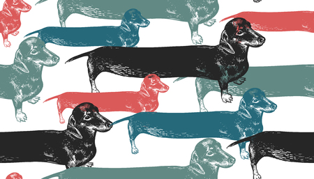 Seamless pattern. Dachshunds long dogs black, red, blue, green. Cute puppies. Home pet isolated on white background. Sketch animals. Vector illustration. Style vintage engraving. Retro hand drawing.