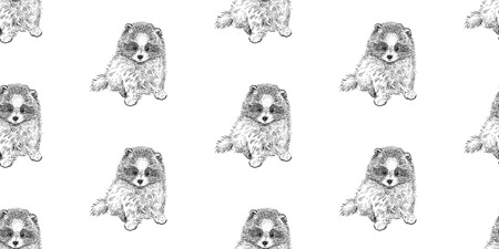 Pomeranian dog. Seamless pattern with cute puppies. Home pets isolated on white background. Sketch. Vector illustration art. Realistic portraits of animal. Vintage. Black and white hand drawing of dog
