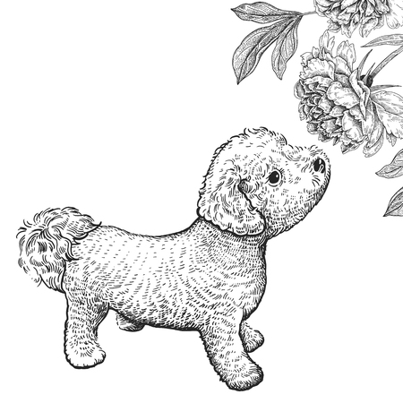 Cute puppy sniffing peony flower. Home pet isolated on white background. Sketch. Vector illustration art. Realistic portrait of animal in style vintage engraving. Black and white hand drawing of dog. Ilustração
