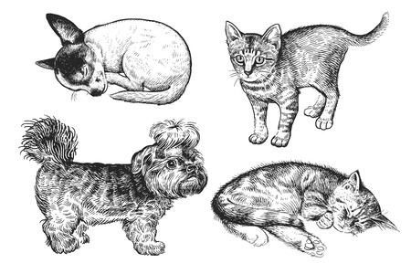 Cute puppies and kittens set. Home pets isolated on white background. Sketch. Vector illustration art. Realistic portraits of animal. Vintage. Black and white hand drawing of dogs and cats.