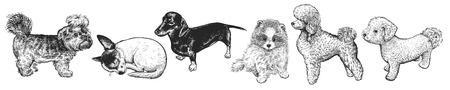 Conjunto de cachorros lindos. Mascotas caseras aisladas sobre fondo blanco. Bosquejo. Arte de ilustración vectorial. Retratos realistas de animales. Clásico. Dibujo de perros a mano en blanco y negro.