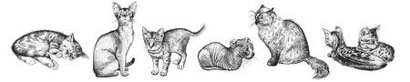 Conjunto de lindos gatitos. Mascotas caseras aisladas sobre fondo blanco. Bosquejo. Arte de ilustración vectorial. Retratos realistas de animales. Clásico. Dibujo de gatos a mano en blanco y negro.