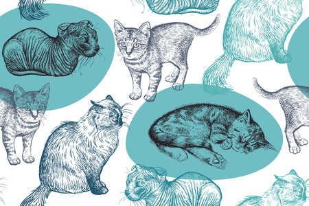 Cute kittens seamless pattern. Home pets background. Sketch. Vector illustration art. Realistic portraits of animal. Vintage. Black, white and blue hand drawing of cats.