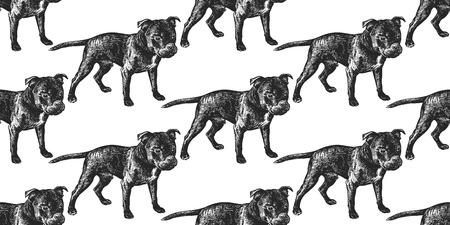 Staffordshire Bull Terrier dog. Seamless pattern cute puppies. Home pets isolated on white background. Sketch. Vector illustration art. Realistic portraits of animal. Vintage. Black white hand drawing