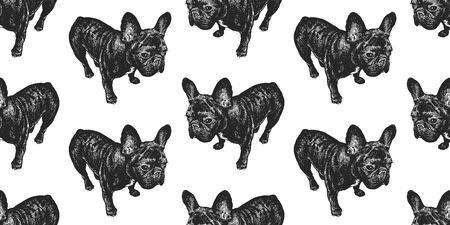 French Bulldog. Seamless pattern with cute puppies. Home pets isolated on white background. Sketch. Vector illustration art. Realistic portraits of animal. Vintage. Black and white hand drawing of dog
