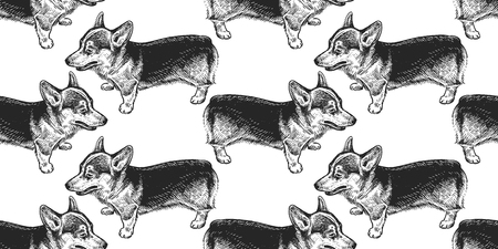 Corgi. Seamless pattern with cute puppies. Home pets isolated on white background. Sketch. Vector illustration art. Realistic portraits of animal. Vintage. Black and white hand drawing of dogs.