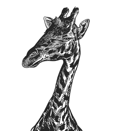 Giraffe. Realistic portrait of African animal. Vintage engraving. Vector illustration art. Black and white hand drawing. Head of giraffe is close-up. Funny facial expressions of Wildlife Animal. Ilustração