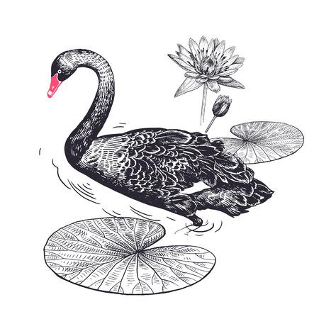 Decoración con flores y aves exóticas. Dibujo a mano realista de cisne y nenúfar aislado sobre fondo blanco. Arte de ilustración vectorial. Boceto en blanco y negro. Grabado de época.