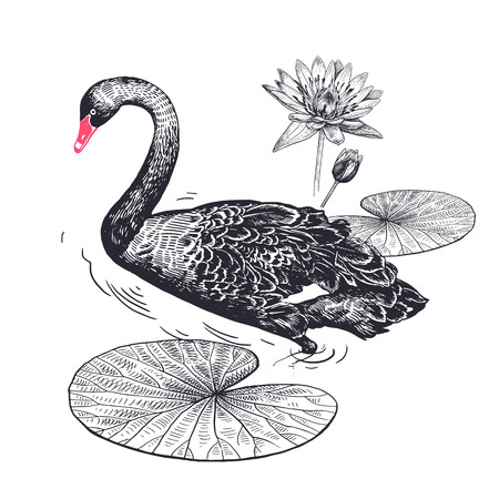 Decoration with exotic bird and flowers. Realistic hand drawing of Swan and water lily isolated on white background. Vector illustration art. Black and white sketch. Vintage engraving.