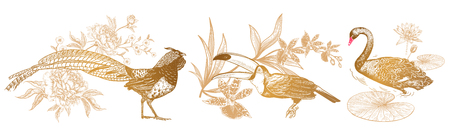 Decorations birds and flowers set. Realistic hand drawing isolated. Pheasant and peonies, toucan and orchid, swan and water lily. Vector illustration. Gold and white. Vintage engraving. Ilustrace