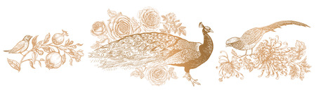 The scenery of birds and flowers. Realistic hand drawing isolated. Peacock and peonies, pheasant and chrysanthemums, nightingale and garnet. Vector illustration. Gold and white. Vintage engraving.