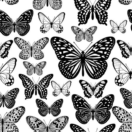 Varietà di farfalle tropicali. Reticolo senza giunte di estate con insetti grafici. Decorazione in bianco e nero. Illustrazione vettoriale. Design per la stampa su tessuti, tessuti, carta da parati, carta, cuscini, borse.