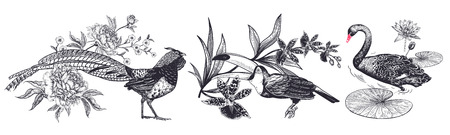 Decorations birds and flowers set. Realistic hand drawing isolated. Pheasant and peonies, toucan and orchid, swan and water lily. Vector illustration. Black and white. Vintage engraving. Ilustracja