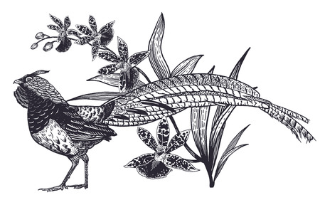 Decoration with bird and flowers. Realistic hand drawing of pheasant and beautiful Orchid isolated on white background. Vector illustration art. Black and white sketch. Vintage oriental engraving.
