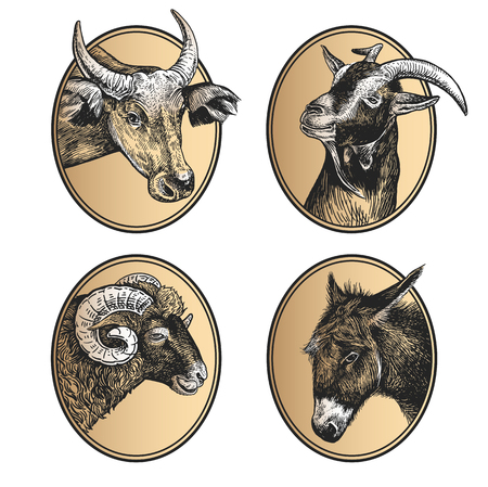 Portraits of animals in frame. Set of icons. Farm animals. Livestock cow, ram, goat, and donkey. Print black and gold foil on white background. Vector illustration, sketch. Hand drawing. Vintage style Illustration