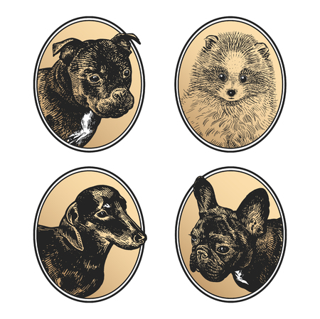 Portraits of animals in frame set. Pet dogs and puppies. Bull Terrier, Dachshund, Spitz and Bulldog. Print black and gold foil on white background. Vector illustration, sketch. Hand drawing. Vintage.