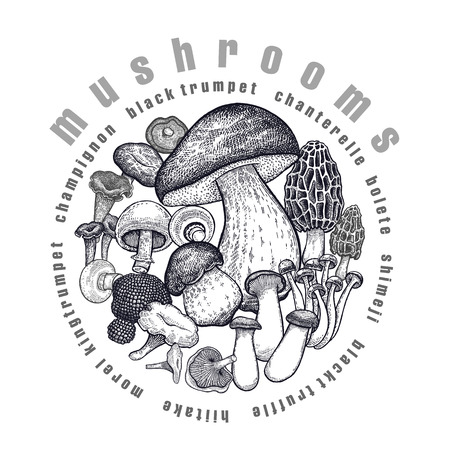 Mushrooms in circle. Template of signboard, poster, cover. Bolete, Morel, Truffle, Shimeji, Champignon, Chanterelle, Black Trumpet, King Trumpet. Black, white. Vector illustration vintage engraving Ilustração