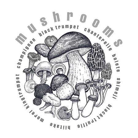 Mushrooms in circle. Template of signboard, poster, cover. Bolete, Morel, Truffle, Shimeji, Champignon, Chanterelle, Black Trumpet, King Trumpet. Black, white. Vector illustration vintage engraving Illustration