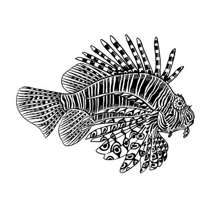 Decorative coral fish zebra isolated on white background. Vector illustration. Animal of underwater world. Hand drawing sketch. Vintage engraving. Sea oceanic animal. Kitchen decoration Black & white Illustration