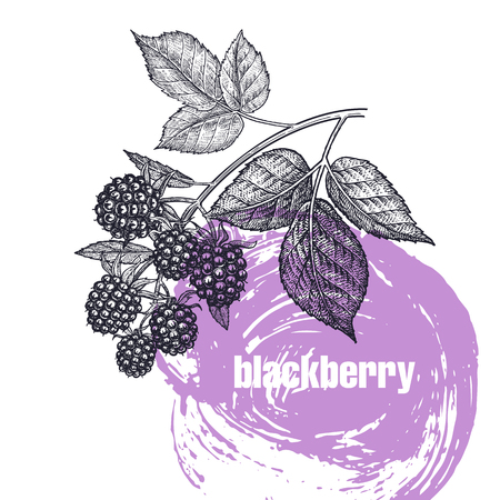 Realistic vector illustration of berry isolated on white background. Hand drawing sketch. Design for package of health and beauty natural products. Vintage black and white engraving