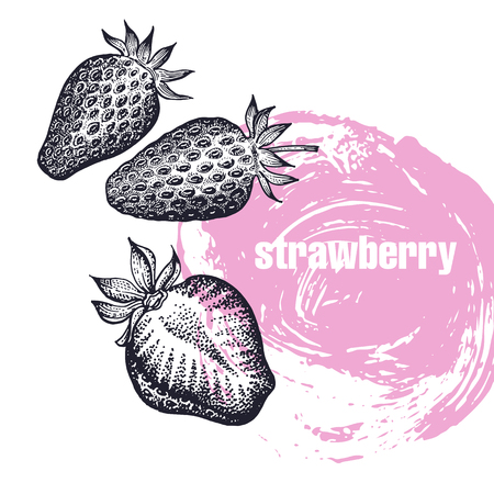 Strawberry. Realistic vector illustration of berry isolated on white background. Hand drawing sketch. Design for package of health and beauty natural products. Vintage black and white engraving