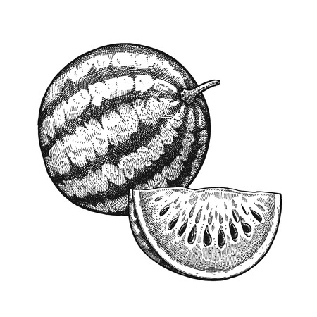 Watermelon. Realistic vector illustration plant. Melon fruit isolated on white background. Hand drawing. Decoration for the menu and kitchen design. Vintage black and white engraving. Vegetarian food