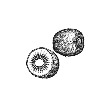 Kivi fruit. Realistic vector illustration plant. Apterux isolated on white background. Hand drawing. Decoration for the menu and kitchen design. Vintage black and white engraving. Vegetarian food