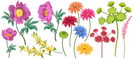 Set of decorative garden flowers isolated on white background. Peonies, asters, other plants. Vector illustration. Motives nature for creating design greeting cards, wedding invitations, business card