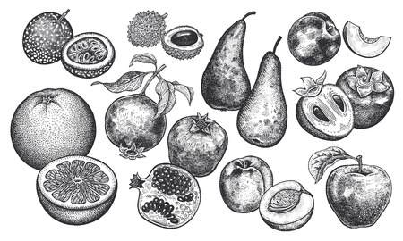 Berries and fruit set. Realistic grapefruit, peach, pomegranate, apple, pear, persimmon, nectarine, passion fruit, lychee isolated on white background. Hand drawing. Vintage. Black and white. Vector.
