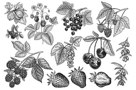 Duży zestaw jagód. Realistyczne truskawki, wiśnie, maliny, jeżyny, goji, porzeczki, jagody, agrest na białym tle. Rysunek odręczny. Zabytkowe. Czarny i biały. Wektor. Ilustracje wektorowe