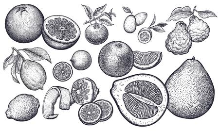 Geïsoleerde citrusvruchten set. Sinaasappel, citroen, limoen, mandarijn, pomelo, grapefruit, bergamot, kumquat. Zwart en wit. Vintage vector illustratie kunst. Realistische handtekening.