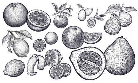 Isolated citrus fruit set. Orange, lemon, lime, mandarin, pomelo, grapefruit, bergamot, kumquat. Black and white. Vintage vector illustration art. Realistic hand drawing. 版權商用圖片 - 124960867