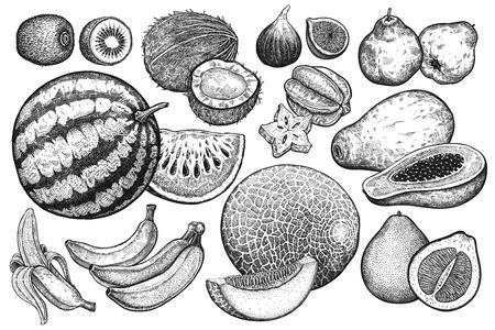 Allegagione isolata. Anguria, melone, kiwi, cocco, papaya, pomelo, banane, mele cotogne, fichi e carambole. Bianco e nero. Arte di illustrazione vettoriale vintage. Disegno a mano realistico.