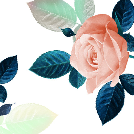 Floral card. Flowers roses white background. Floral template for design wedding invitations, greetings, business card, decoration floral shops, packaging, shop windows, signboards Vintage illustration Stockfoto