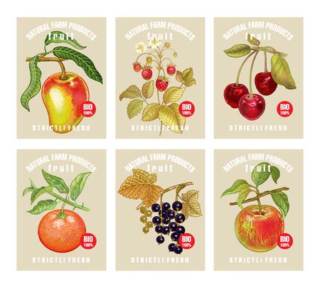 Etiketten mit verschiedenen Früchten, Beeren und Inschriften. Legen Sie Vorlagen für Preisschilder für Geschäfte und Märkte für vegetarische Bio-Lebensmittel fest. Vektorillustrationskunst. Jahrgang. Handzeichnung von Naturobjekten.