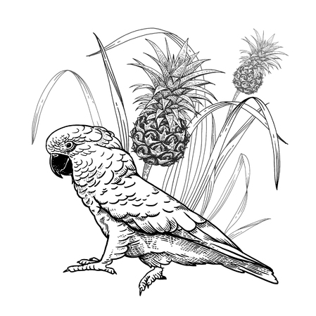 Parrot and pineapple plant. Bird and fruit. Tropical decoration. Wildlife pattern. Black on a white background. Vintage engraving. Template for printing on summer t-shirts, bags, posters. Illustration
