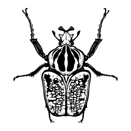 Goliath.Black and white sketch. Insect beetle isolated on white background. Realistic drawing bug. Vector illustration. Stok Fotoğraf - 120598435