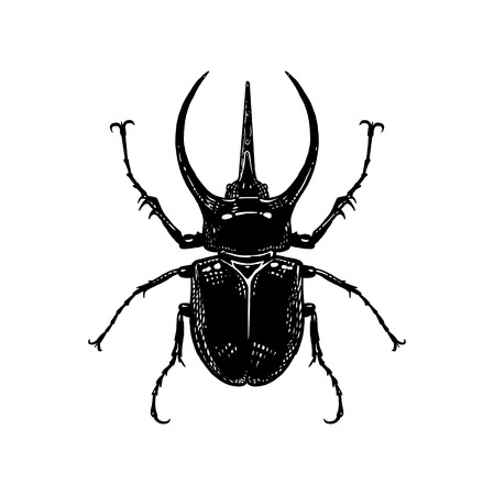Black and white sketch. Insect beetle isolated on white background. Realistic drawing bug. Vector illustration. Illustration