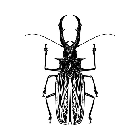 Black and white sketch. Insect beetle isolated on white background. Realistic drawing bug. Vector illustration.  イラスト・ベクター素材