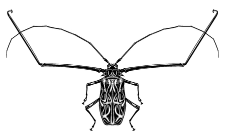 Black and white sketch. Insect beetle isolated on white background. Realistic drawing bug. Vector illustration. Stok Fotoğraf - 120598439