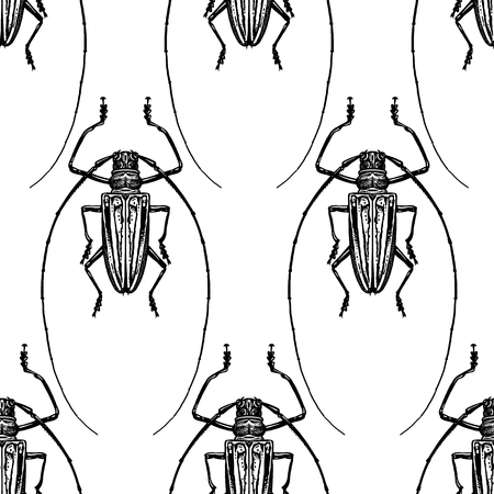 Insect beetle isolated on white background. Seamless pattern. Black and white sketch. Realistic drawing bug. Vector illustration. Çizim