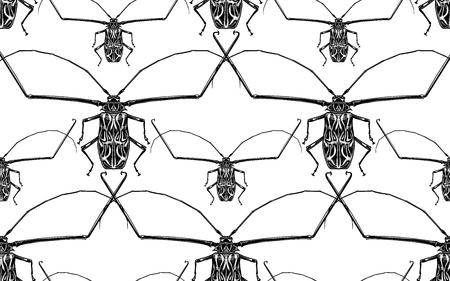 Insektenkäfer Harlekin isoliert auf weißem Hintergrund. Nahtloses Muster. Schwarz-Weiß-Skizze. Fehler beim realistischen Zeichnen. Vektor-Illustration. Vektorgrafik