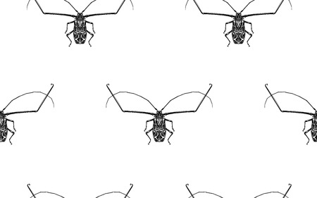 Insect beetle harlequin isolated on white background. Seamless pattern. Black and white sketch. Realistic drawing bug. Vector illustration.
