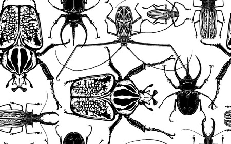 Various beetles on white background. Beetle rhino, harlequin, goliath and others insect. Seamless pattern. Black and white sketch. Realistic drawing bug. For fabrics, summer textiles, wallpaper, paper